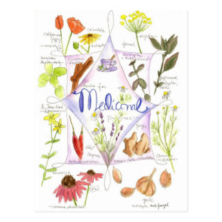 Cartão Postal Papoila medicinal do alho do Echinacea da erva