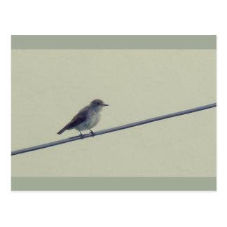Cartão postal - pássaro