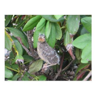 Cartão Postal Pássaro de bebê