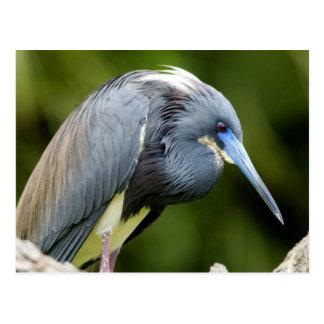 Cartão Postal Pássaro em um registro