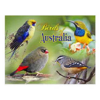 Cartão Postal Pássaros de Austrália