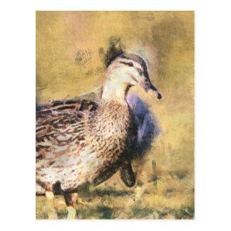 Cartão Postal Pato