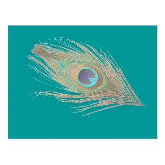 Cartão Postal Pena do pavão