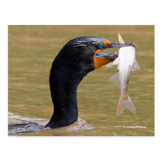 Cartão Postal Perfil de um Cormorant Dobro-Com crista adulto