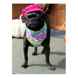Cartão Postal Pérola - Pug e raça Photo-08 da mistura de Boston
