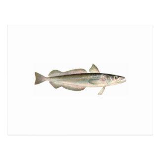 Cartão Postal Pescadas de prata - pescadas