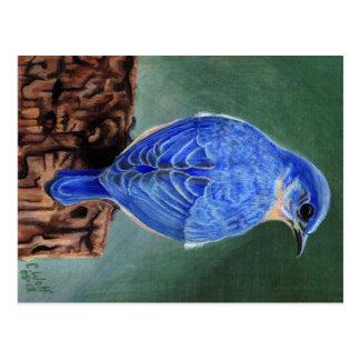 Cartão Postal Pintura das canvas do Bluebird