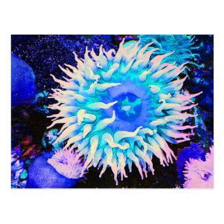 Cartão Postal Planta submarina tropical da anêmona