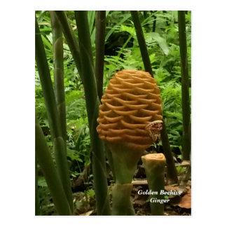 Cartão Postal Planta tropical do gengibre da colmeia
