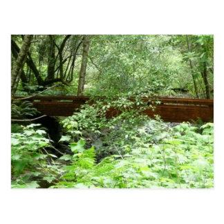Cartão Postal Ponte das madeiras de Muir mim