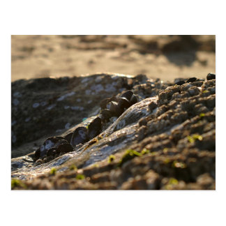 Cartão Postal Por do sol dos mexilhões