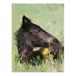 Cartão Postal Potro do bebê que encontra-se no prado