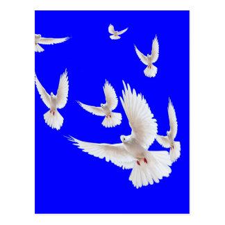 Cartão Postal Presentes brancos dos azuis cobaltos das pombas