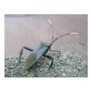 Cartão Postal Preto adulto artigos Folha-Pagados do inseto