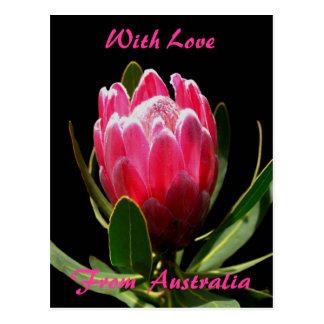 Cartão Postal Protea cor-de-rosa, com amor, de Austrália