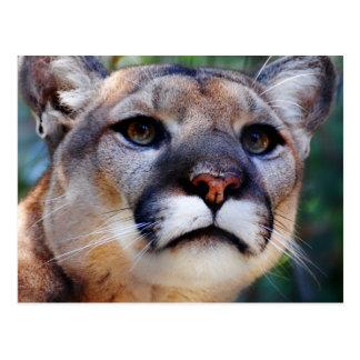Cartão Postal Puma