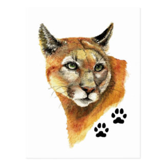 Cartão Postal Puma, puma, trilhas do animal do leão de montanha