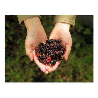 Cartão Postal Punhado das bagas do Mulberry frescas e doces
