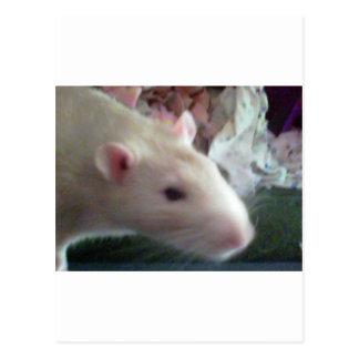 Cartão Postal Ratos