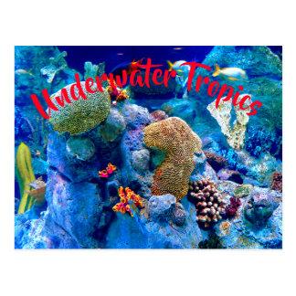 Cartão Postal Recife de corais submarino colorido tropical