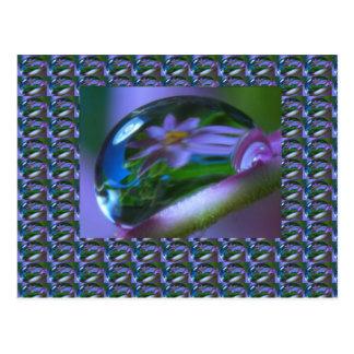 Cartão Postal REFLEXÃO da flor em uma GOTA de ORVALHO.