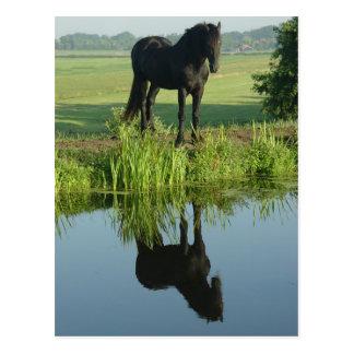 Cartão Postal Reflexão do cavalo do frisão na água