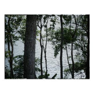 Cartão Postal Rio e árvores