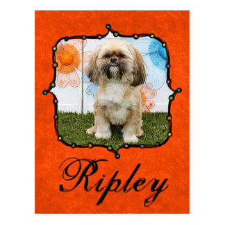 Cartão Postal Ripley - Shih Tzu