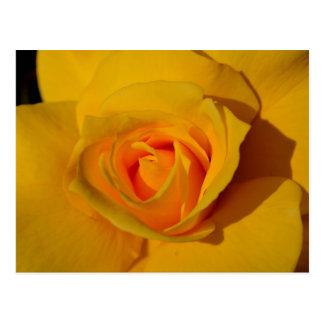 Cartão Postal Rosa amarelo