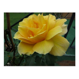 Cartão Postal Rosa amarelo aberto