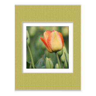 Cartão Postal Rosa amarelo com esteira do falso