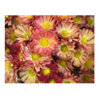 Cartão Postal Rosa do amarelo do jardim do conjunto do