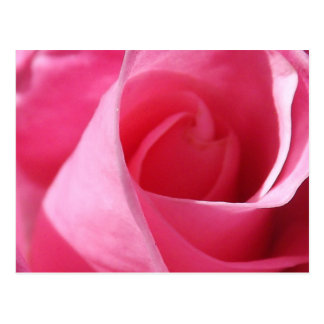 Cartão Postal Rosa eterno