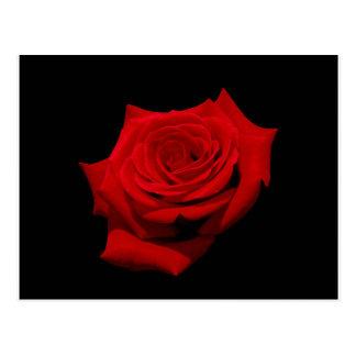 Cartão Postal Rosa vermelha no fundo preto