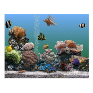 Cartão Postal rsvp do aquário