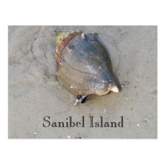 Cartão Postal Sanibel Shell