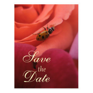 Cartão Postal Senhora Desinsetar Rosa Casamento