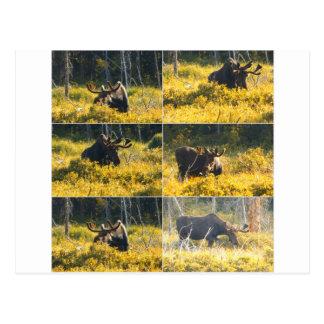 Cartão Postal Sonho dos caçadores