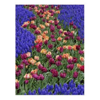 Cartão Postal Teste padrão das tulipas e das flores do jacinto