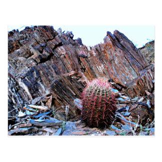 Cartão Postal Um cacto no deserto de Sonoran