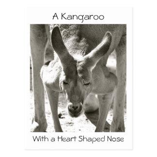 Cartão Postal Um canguru com um nariz dado forma coração