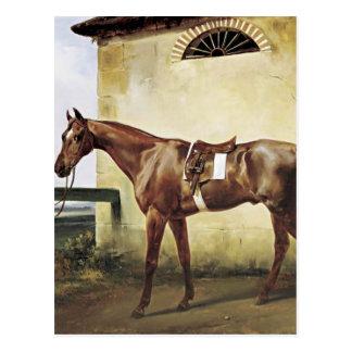 Cartão Postal Um cavalo de raça selado amarrado a uma cerca por