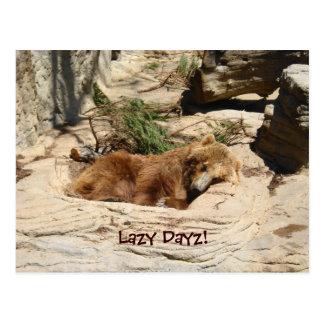 Cartão Postal Urso preguiçoso de Dayz