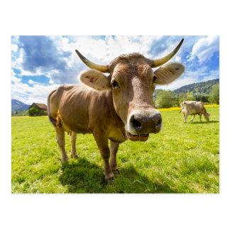 Cartão Postal Vaca Nosy que pasta