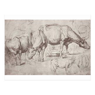 Cartão Postal Vacas por Peter Paul Rubens