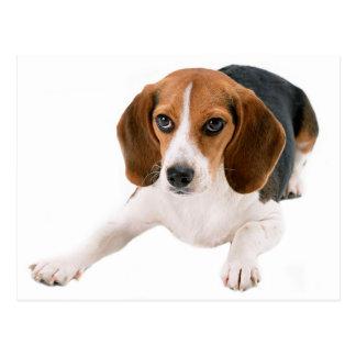 Cartão Postal Vazio do cão de filhote de cachorro do lebreiro