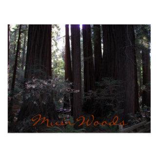 Cartão Postal Viagem das madeiras de Muir