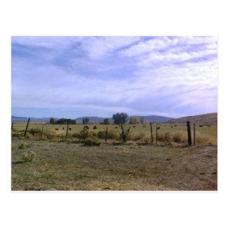 Cartão Postal Vida do rancho