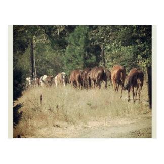 Cartão Postal Vida no rancho