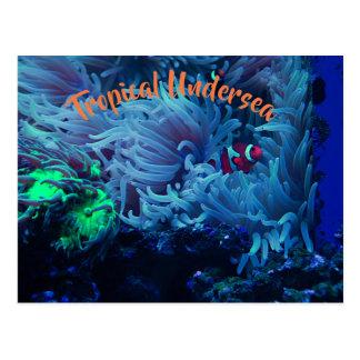 Cartão Postal Vida submarina
